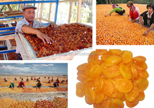 Seedless Natural Dried Apricot