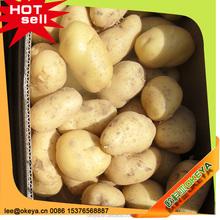 2015 Potato Exporter In Bangladesh, Potato Export To Dubai, World Price Of Potato