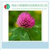 Herbal extract Manufacturer Supply Trifolium extract,Biochanin Ared clover Biochanin A,Red Clover Extract Biochanin A