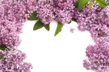 tv background The ocean of purple flowers art designer wallpaper murlals for home decor