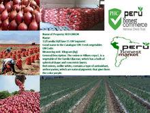 frsh onions