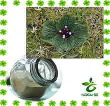 Relieve Pain Tibetan Herb Lamiophlomis Rotata Extract