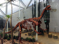 indoor playground exhibition real size skeleton dinosaur hot selling