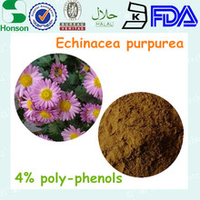 in bulk high quality echinacea extract polyphenol 4% antiviral treat cold medicine