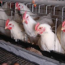 Fio de galinha para gaiola de pássaro / gaiola de galinha para venda em filipinas / camada de frango preço gaiola