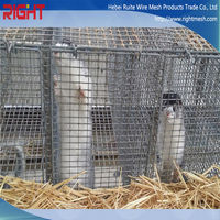 quality products stainless steel 316 breeding mink cages with wooden box for sale