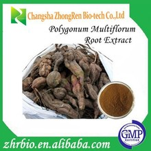 100% Pure Natural High Quality Polygonum Multiflorum Root Extract 10:1
