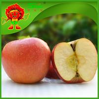 2015 new crop Fresh red fuji apple