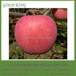 Wholesale Prices Fresh Apple Fruit Packed in 10kg 20kg Cartons