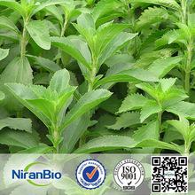 Oranic Sweetner China pure Stevia Extra RA98