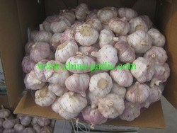 fresh red garlic price for supermarket, 10kg/carton, price of garlic