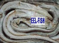 eel fish ,leather jaket ,ribbon fish ,crocker ,seabreen, lady fish ,cat fish,