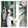 modern chicken farm used large scale Scientific management automatic chicken raising equipment