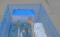 Клетки и Аксессуары для птиц Wga , box /bird cage 26 * 11 * 13 123