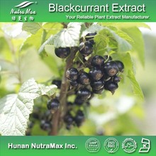 High Quality Black Currant PE/Black Currant Extract/Black Currant Oil