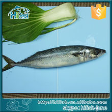 See larger image Best Price Whole Round Frozen Pacific Horse Mackerel