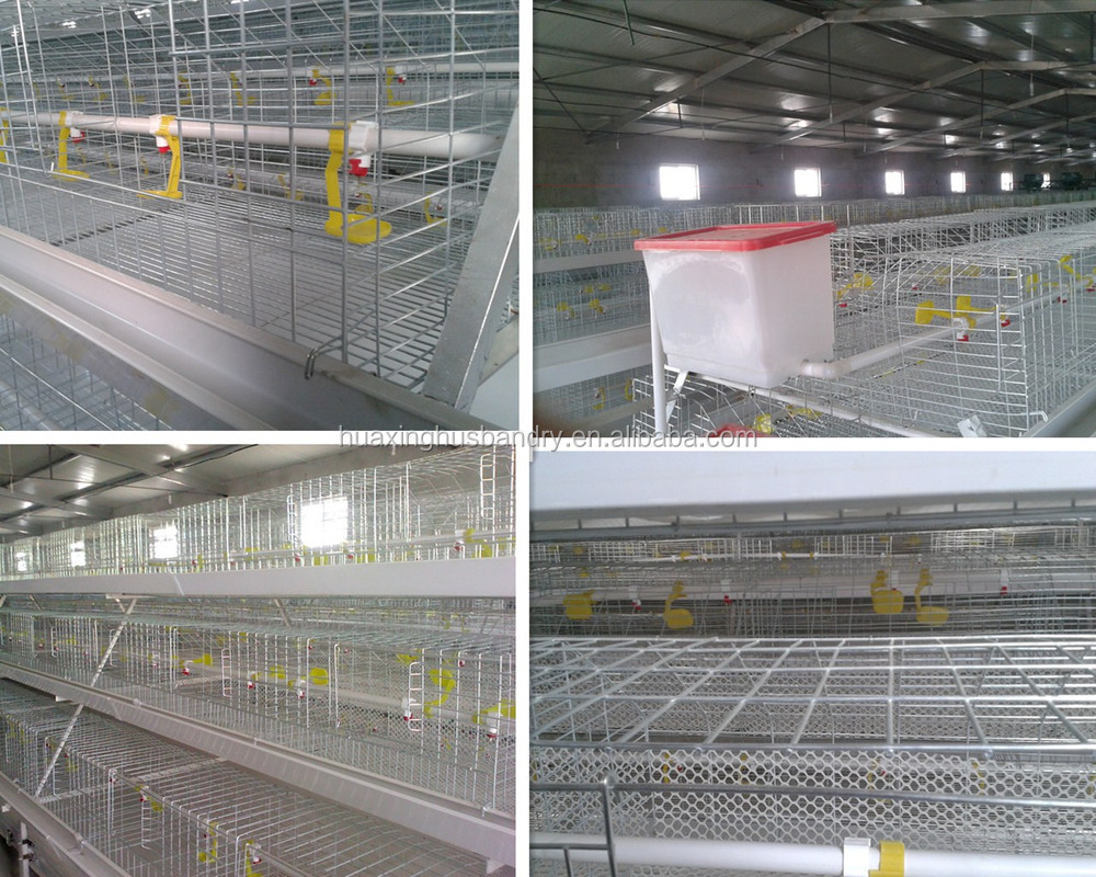 Poultry Farm Cage Wire Mesh Cage Chicken Layer For Kenya Farms ...