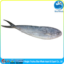mahi mahi sea food frozen