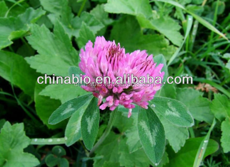 Red Clover Extract from professional GMP manufacturer