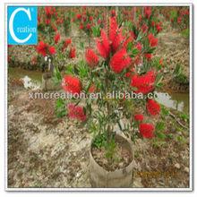 flower potting plants