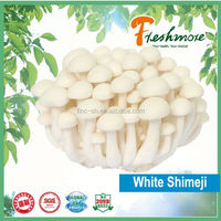 Finc fresh Soilless Culture mushroom spawn for sale