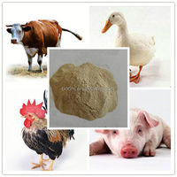 animal feed grade protein yeast