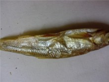 7 cm Freeze dried Fish for Pet (turtle;lizard);Factory Price Dried fish