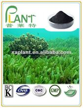 100% Natural Dried seaweed extract
