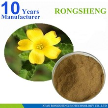 high quality natural damiana leaf extract