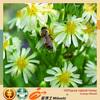 professional manufacturer export natural 100%pure flower honey