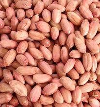 bulk raw peanut kernel