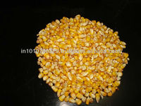 Corn Feed In Bulk For Philippines