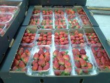 Fresh Egyptian strawberry