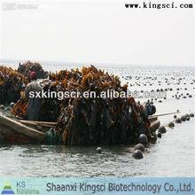 de alta calidad de extracto de algas marinas fucoxantina extracto
