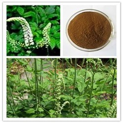 Top Quality Black Cohosh Extract with Triterpenoid saponis 5%