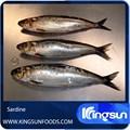 grado superior de sardinas