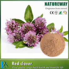 Manufactory price red clover
