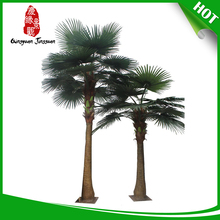 Hot China factory palm trees pictures