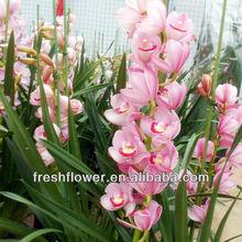 exportamos todo tipo de flores frescas cortadas de orquídeas flores