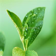 Natural Sodium Copper Chlorophyllin 99% for food additives
