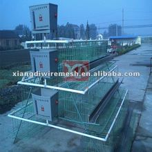 lay hen cage equipment supplier