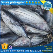 Sea frozen wholesale skipjack tuna fish for sale