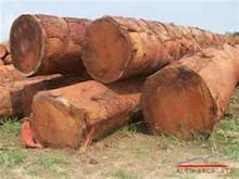 Timber logs ,Tali, Okan, Dabema, Bilinga, Frake, Azobe, Padouk And More
