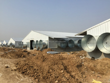 automatic environmental controlled small poultry house