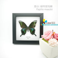 FOUSEN(054 Random Species) 18*18*3cm Cheap PS Framed Single Butterfly Gifts and Crafts