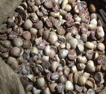 Betel Nuts Split Dried (Half Cut)