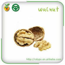 Wholesale Walnut in shell for Sale
