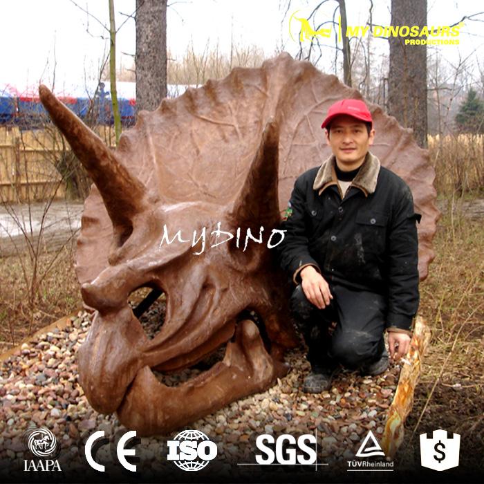 Triceratops Skull.jpg