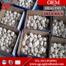 nature pure white garlic price