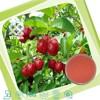 100% Natural Water Soluble Cherry Fruit Powder